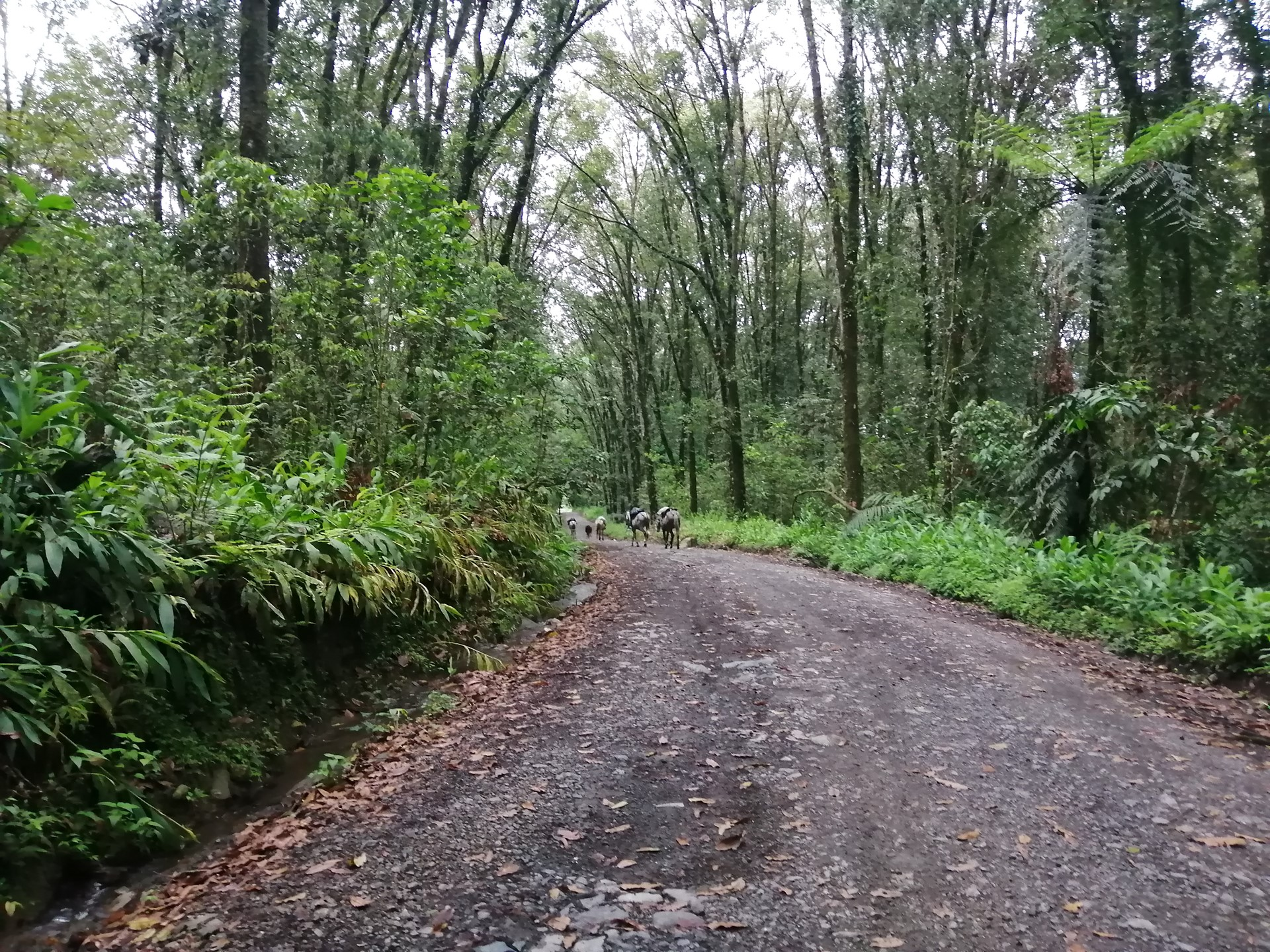 gravel roads cycling colombia